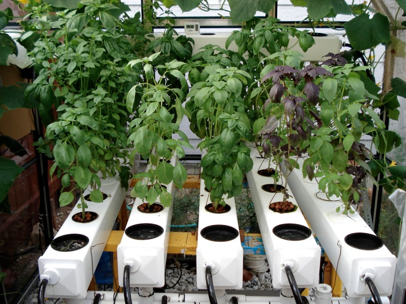 how to grow plants using hydroponics