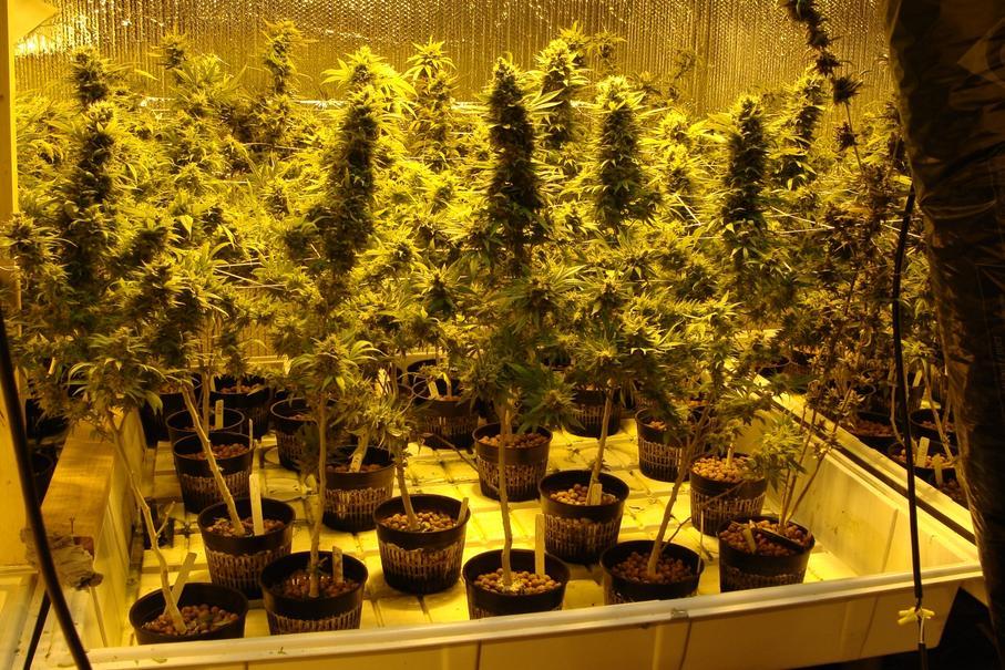 How To Grow Marijuana With Ebb And Flow Hydroponics